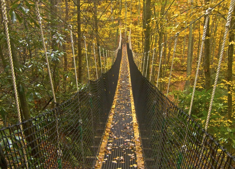Suspension rope bridge extended through a forest.